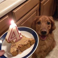 Doggie Birthday Cake Recipe See Original At Allrecipes