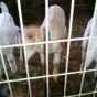 kwishall's picture